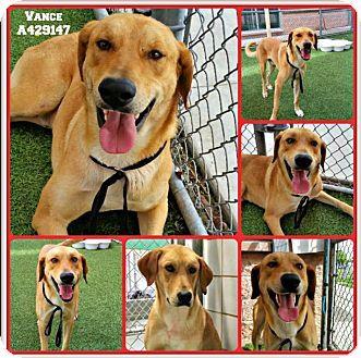 San Francisco, CA - Labrador Retriever Mix. Meet Vance, a dog for adoption. http://www.adoptapet.com/pet/18008348-san-francisco-california-labrador-retriever-mix