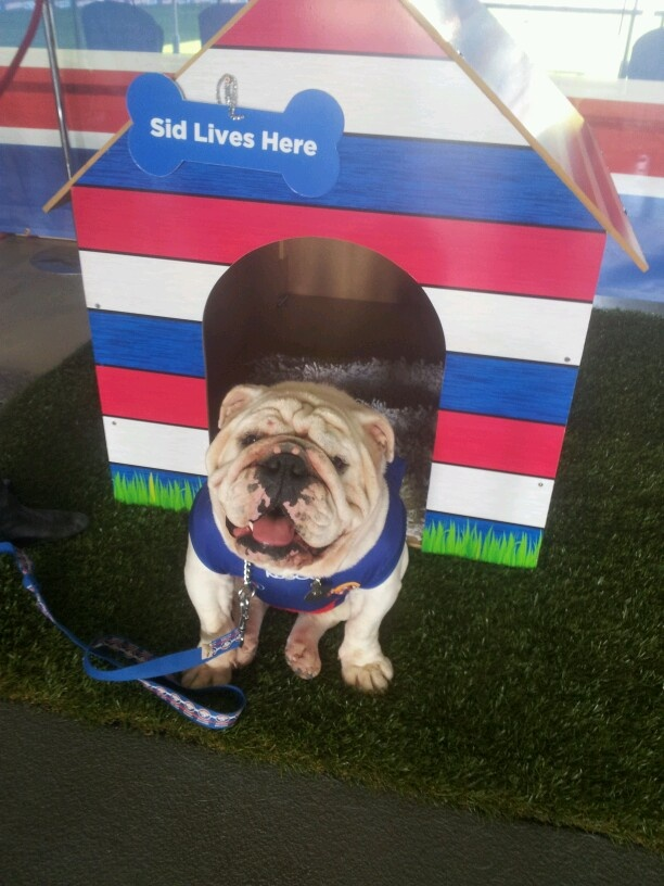 Our beloved Western Bulldogs Mascot Sid in action on game day at Etihad Stadium.