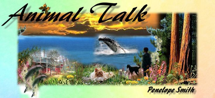 Penelope Smith's animal communicator directory - animal-talk-whales-dolphins-dogs-cats-animal-communication