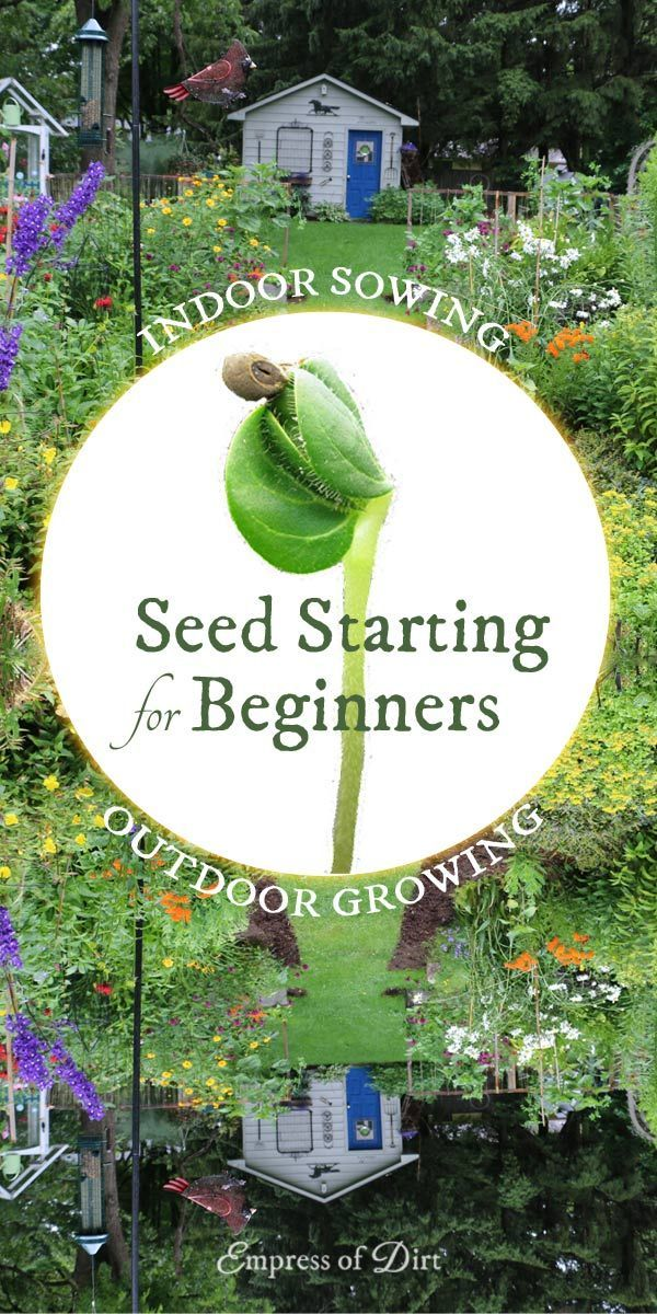 Indoor Seed Starting for Beginners | Sow Indoors Grow Outdoors - Empress of Dirt