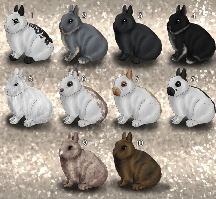 netherland dwarf bunny colors | OPEN ~ Netherland Dwarf by PetiteAmourBulldog on…