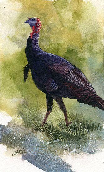 Wild Turkey by Joe Garcia Watercolor ~ 7 x 4.25