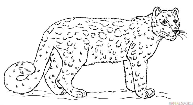how to draw a wolf step by step for beginners