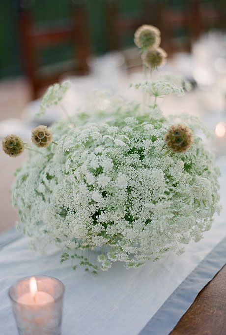 Queen Anne's Lace Centerpiece: This delicate flower is paired here with quirky Scabosia pods.