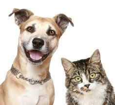 What to do With Pets in a Open House #LocalRecordsOffice #Pets