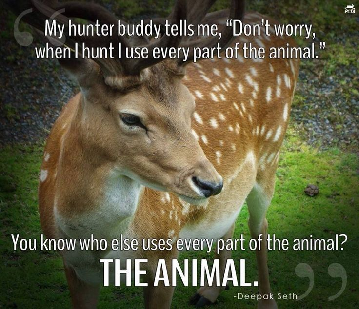 an argument against hunting animals as a form of sport Stop trophy and big game hunting - animal cruelty should not be a sport 3,642 likes 135 talking about this a protest against trophy hunting.