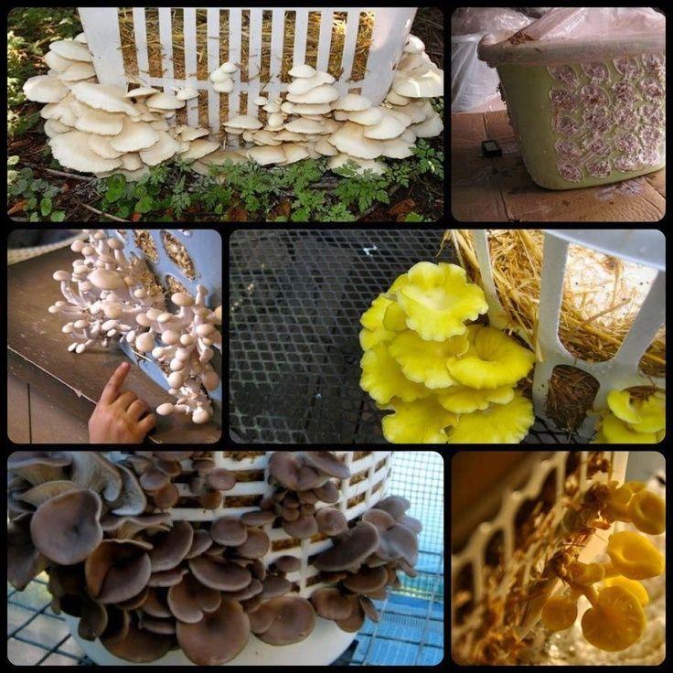 Homestead Survivalist: How to Grow Mushrooms