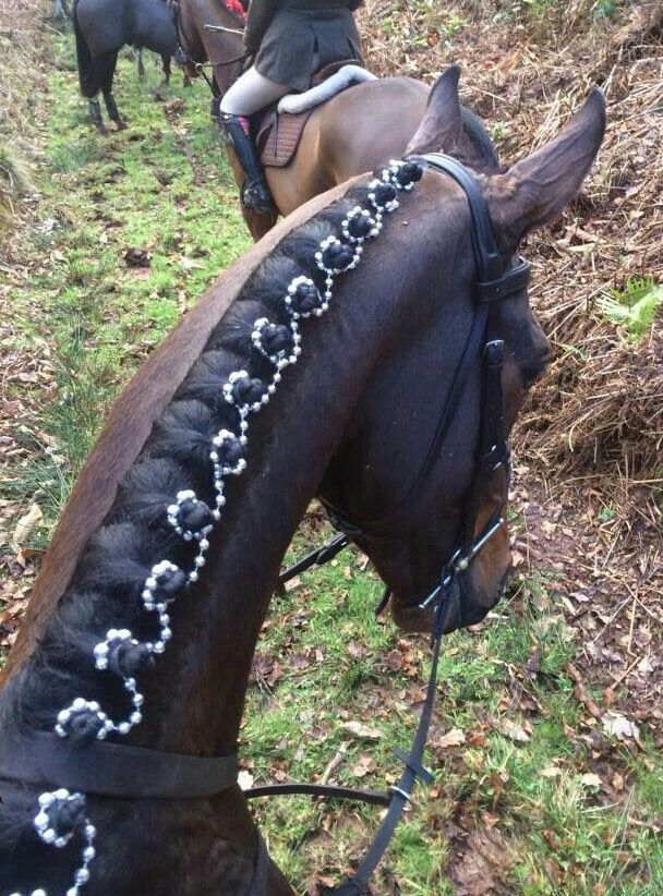 Braided mane with a bit of bling. :-)