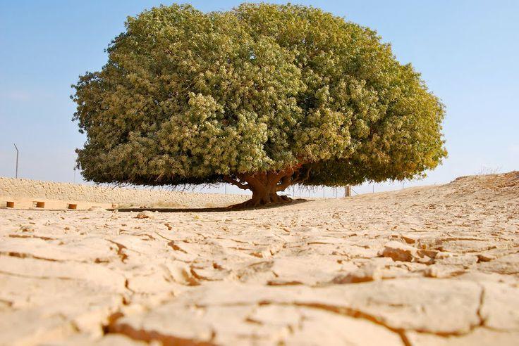 Satu-satunya sahabat Nabi Muhammad SAW yang masih hidup, pohon yang pernah menaungi Nabi Muhammad SAW, Rasulullah pernah bersandar dan berteduh di bawahnya