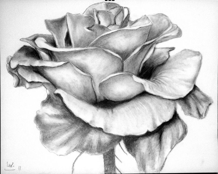 Rose - pencil drawing by Leo-2010.deviantart.com on @DeviantArt