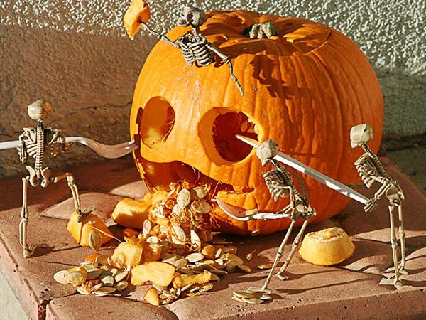 Four small skeletons using plastic flatware to carve a face into a pumpkin.