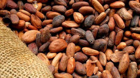 Granos de cacao..