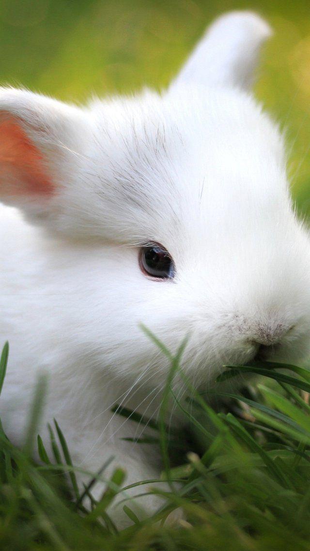 Adorable Via XOXODoraXOXO Spring Springanimals Cute Baby BunniesWhite