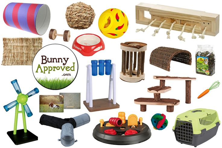 Toys, Snacks, and Accessories for House Rabbits!