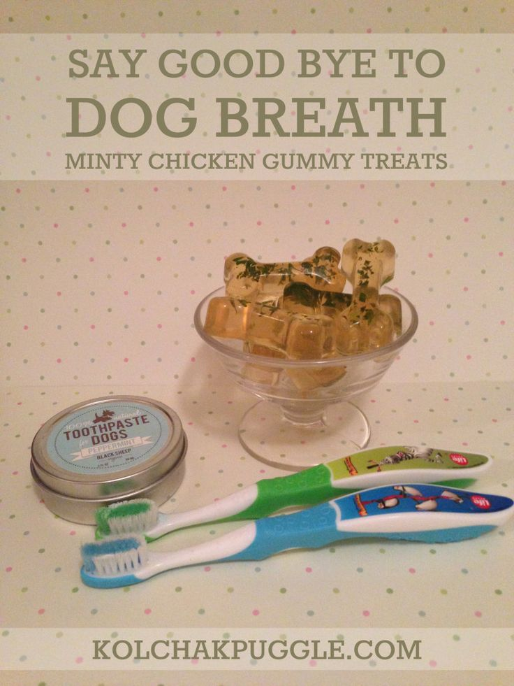 Does your pup ever get Dog Breath? Help your dog freshen up with our Minty Chicken Gummy Dog Treats!