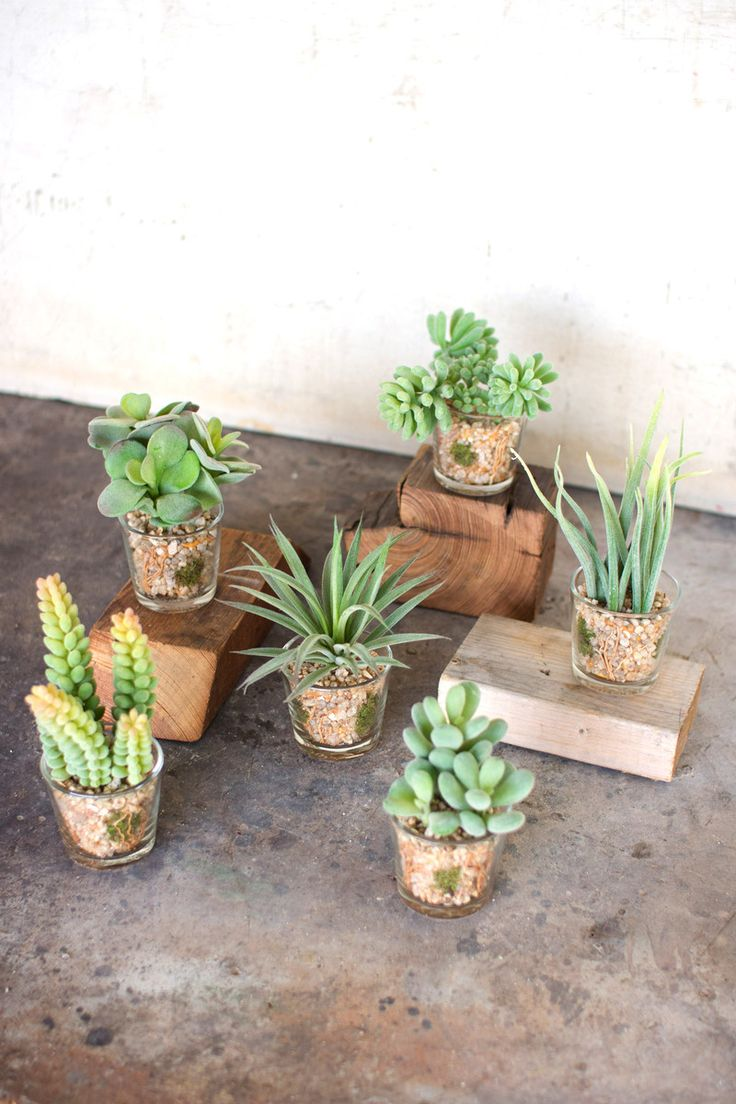 """This set of artificial succulents are so lifelike, your guests might not know the difference! With nine unique designs, these guys are perfect for adding a little green flair to your space. 2½""""d x 5""""tone each styleVersatile and realistic, the best part about our succulents is no watering required!"""