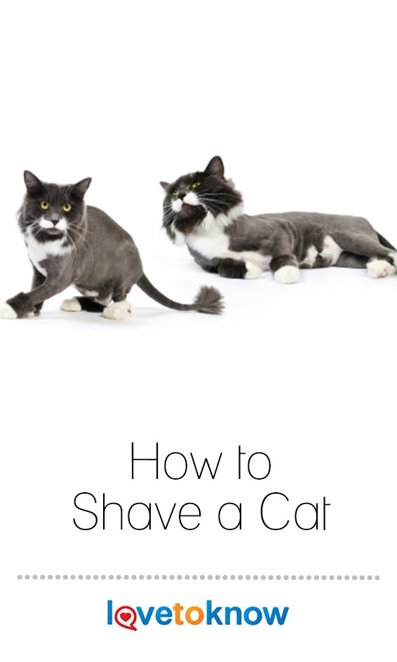 How To Shave A Cat Lovetoknow Shaved Cat Cats Cat Furry