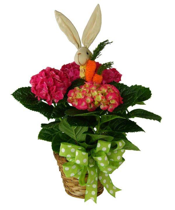246 & Bunny\u0027s Best Hydrangea Plant in 2019 | Easter! | Hydrangea ...