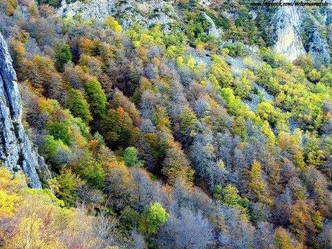 Bosques asturianos en otoño    Photo by Victor Suárez - Fotografía