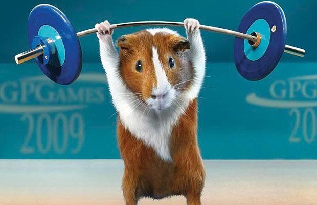 World's Strongest Guinea Pig