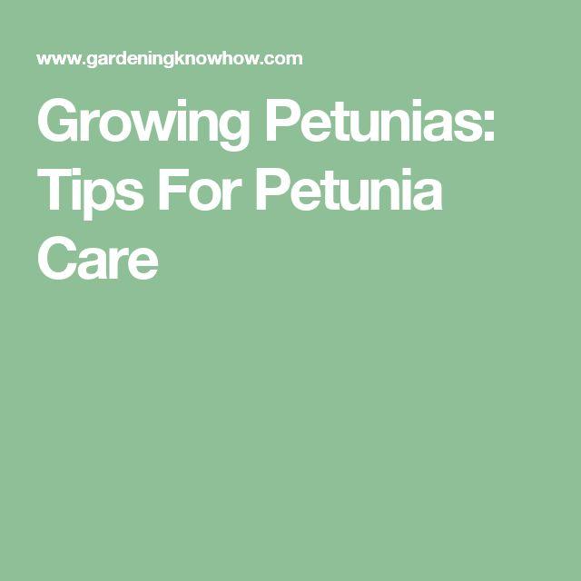 Growing Petunias: Tips For Petunia Care                                                                                                                                                                                 More