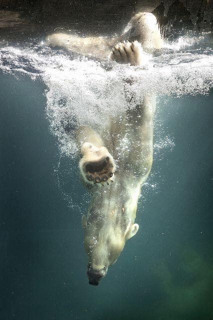 Pinterest라는 사이트에 가입했다. 내가 가입해 놓은 빙글이나 피키캐스트랑 비슷한 개념인 것 같은데, 이렇게 '핀'하면 원본 이미지로 연결도 해 준단다. 첫 사진은 내가 좋아하는 북극곰. 다른 세계로 빠져드는 것 같은 환상적인 느낌이 멋지다.