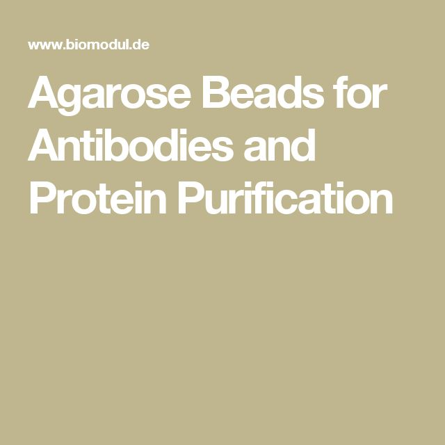 Agarose Beads for Antibodies and Protein Purification