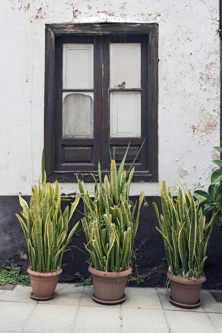 94 best pflanzen in der wohnung images on pinterest house plants indoor plants and landscaping