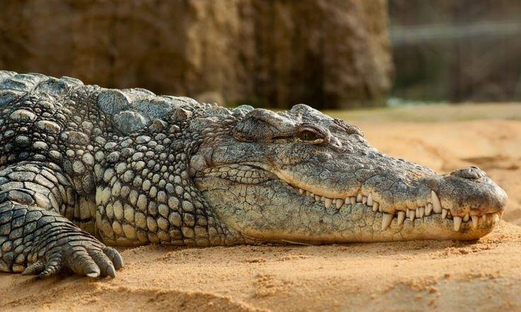 175 best Animal Name List images on Pinterest