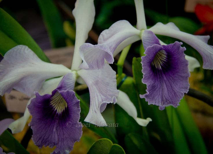 Exotic Orchid Collections Featuring New Hybrids Rare Specimensvariegated Combinations Unusual Colorations Of Flowers