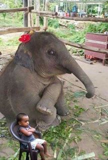 While I'm starting to ache deep inside when I see evidence in the picture that the elephant is captive, forced to work, perform and just displayed, this picture is really funny -- elephants really are just like us!