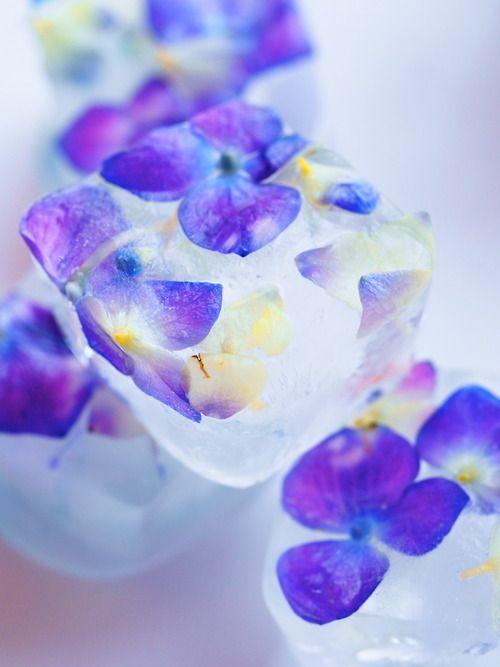 氷中花  紫陽花
