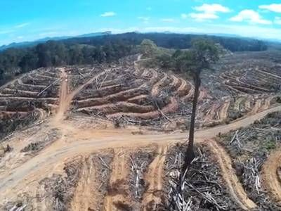 Drone footage shows what rainforest destruction really looks like
