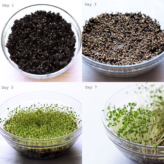 How to make super absorbent Hydra Soil + Sprout Your Own Chia Seeds