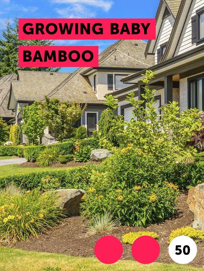 Growing Baby Bamboo Kill Tree Roots Garden Soil Plants