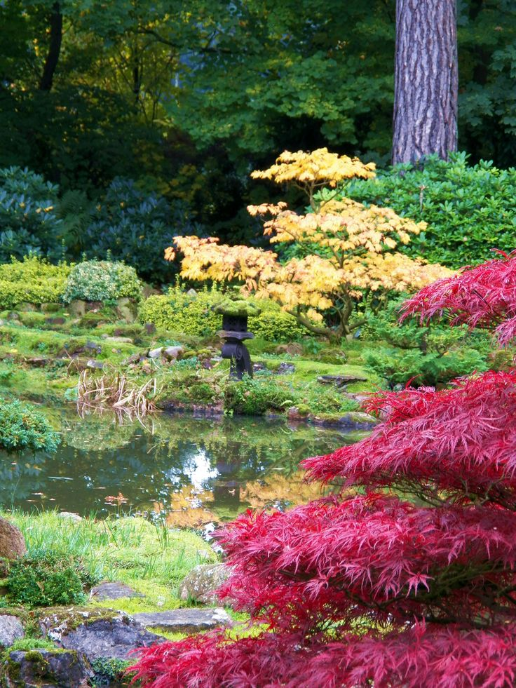 Herbst im Park des Zen Klosters in Schloss Eickhof 2015 Autumn in the Park of the Zen monastery in Castle Eickhof 2015 Japanische Ahorne und Azaleen zeigen jetzt eine weiteren schönen Seite von sich. Japanese maples and azaleas now show a further beautiful side of itself. http://www.zenkloster-in-liebenau.de/ http://www.kokeniwa.de/#home