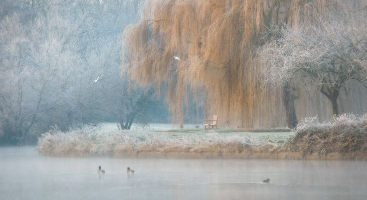 Frost in St Nicholas Park Warwick Image by Gayle Kirton