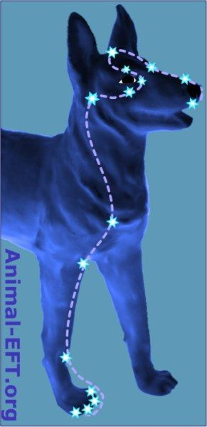 """EFT On A Dog EFT Tapping Points for a dog www.TappingNavigator.com  """"Tapping Into Your Best Life!"""""""