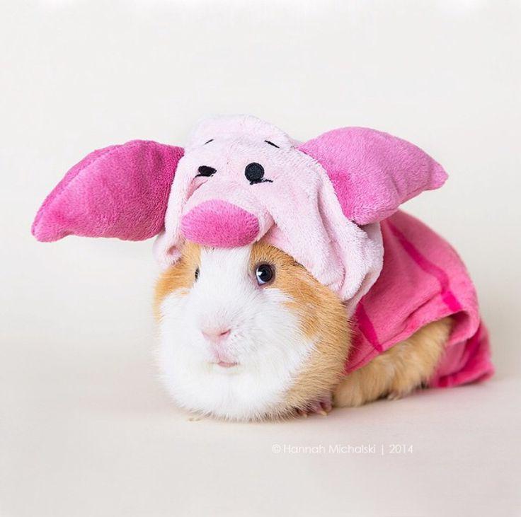 Guinea pig in a pig costume