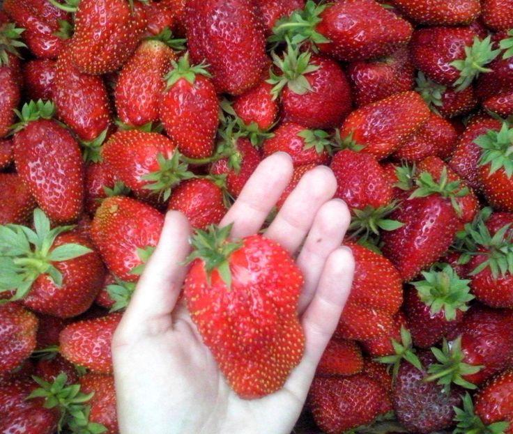 I'm allergic to strawberries