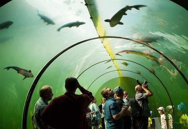 Kudy z nudy - Živá voda - prosklený tunel pod vodou v Modré u Velehradu