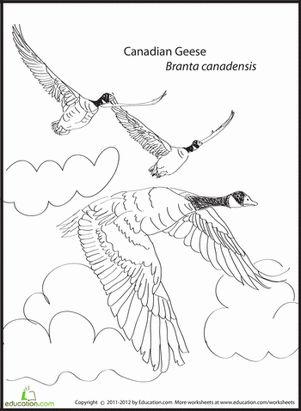 bird migration coloring pages - photo#3