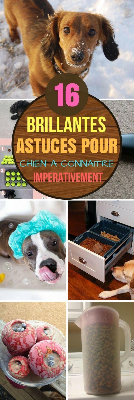 16 ASTUCES POUR CHIEN A CONNAITRE IMPÉRATIVEMENT #astuces #trucs #trucsetastuces #chien