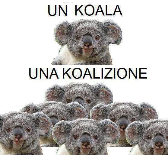 koala :D