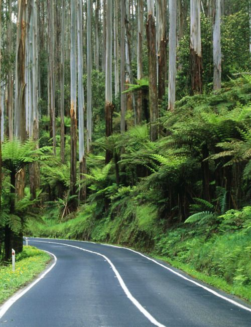 The Dandenong Ranges road. Beautiful in every season.
