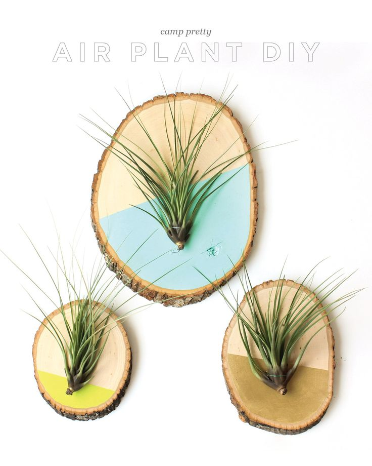 Air plants plant art and wood slices on pinterest for Air plant art