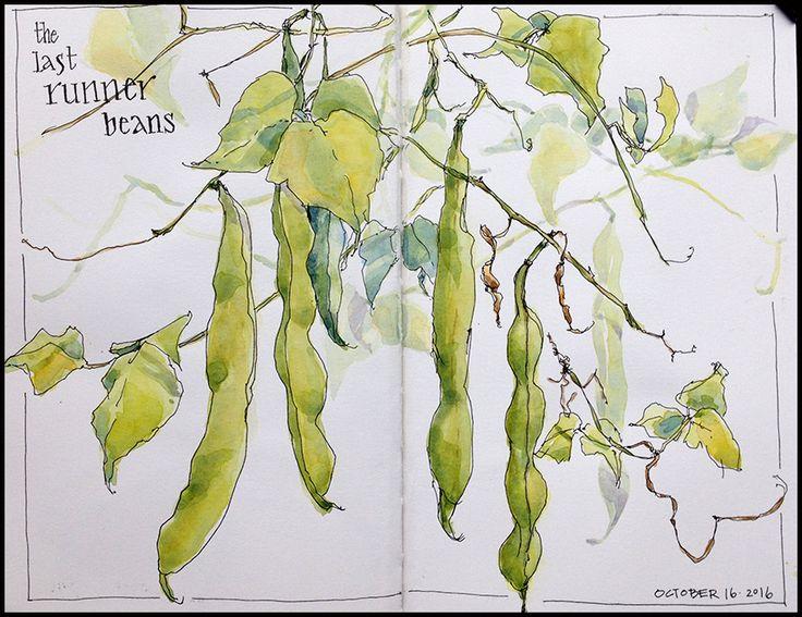 Runner beans - Jean Mackay