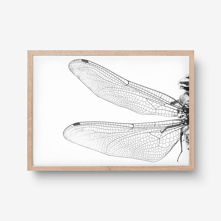 """Check out my @Behance project: """"Dragonfly art print"""" https://www.behance.net/gallery/45302649/Dragonfly-art-print"""