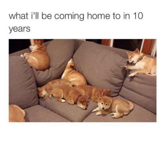 Hahaha.. puppies!