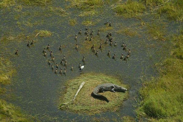 Photographic safaris in the Okavango Delta in Botswana. image: Vumbura Plains